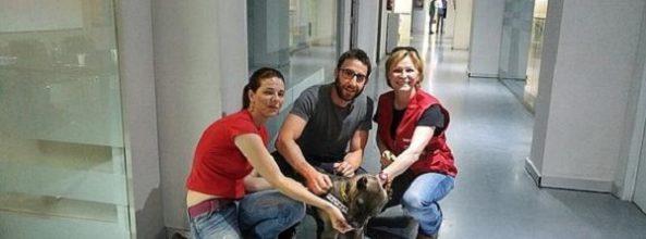 Dani Rovira denuncia en El Hormiguero el sacrificio de todos los PPP en las perreras de Almería