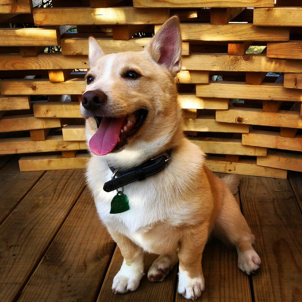DogTV el primer canal exclusivo para los perros