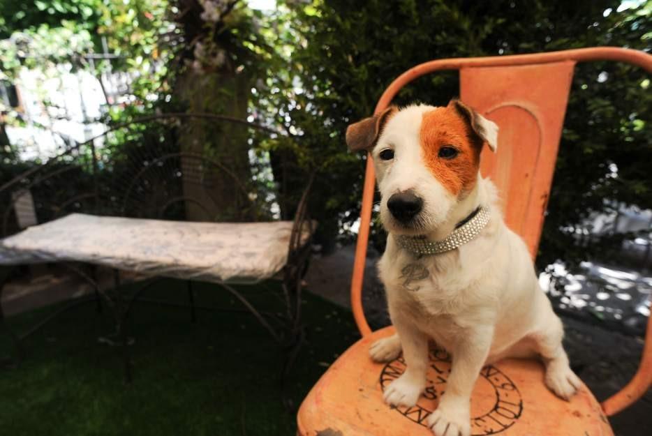 Ha muerto Cook, el perro Pancho de la lotería