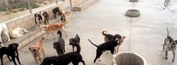 Así son las multas por el abandono de mascotas en toda España