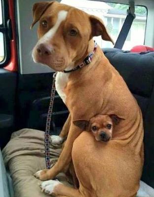 perro-y-su-amigo