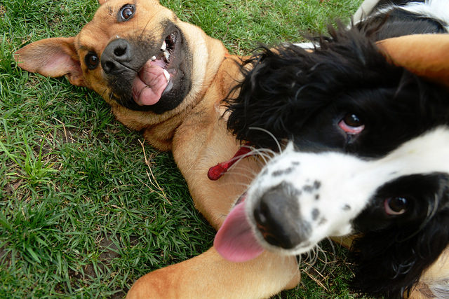 Los perros reaccionan mal ante las personas cabreadas