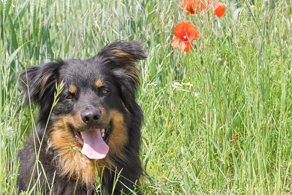 ¿Cómo cuidar de un perro mayor de más de 10 años?