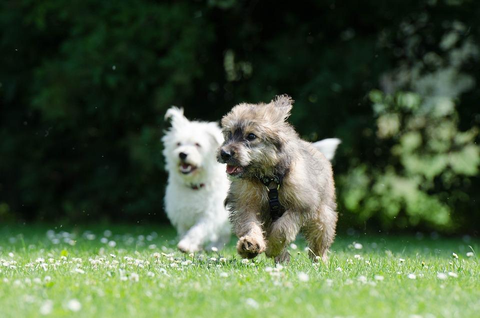 Nuevo software para entender los ladridos de los perros