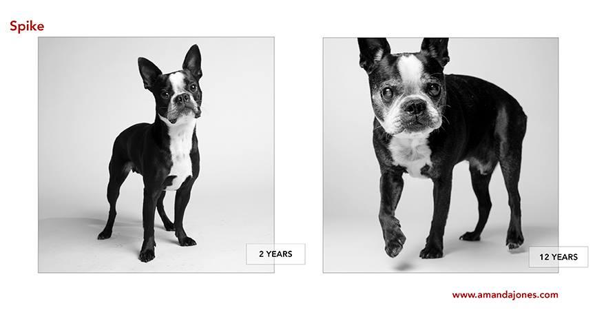 Amanda Jones y sus álbumes de fotos de perros