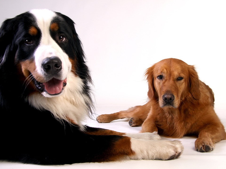 La historia de la domesticación del perro