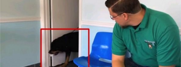 Pierde a su perro y se reencuentra con él tras 8 años