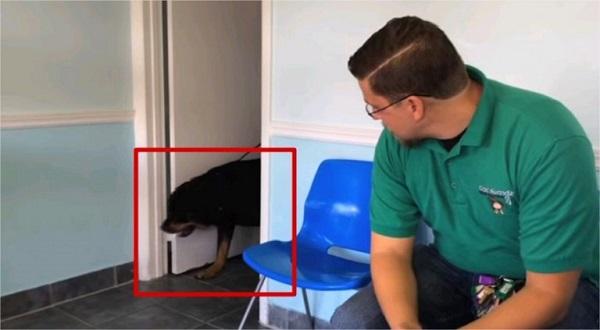 Hombre se reencuentra con su perro tras 8 años