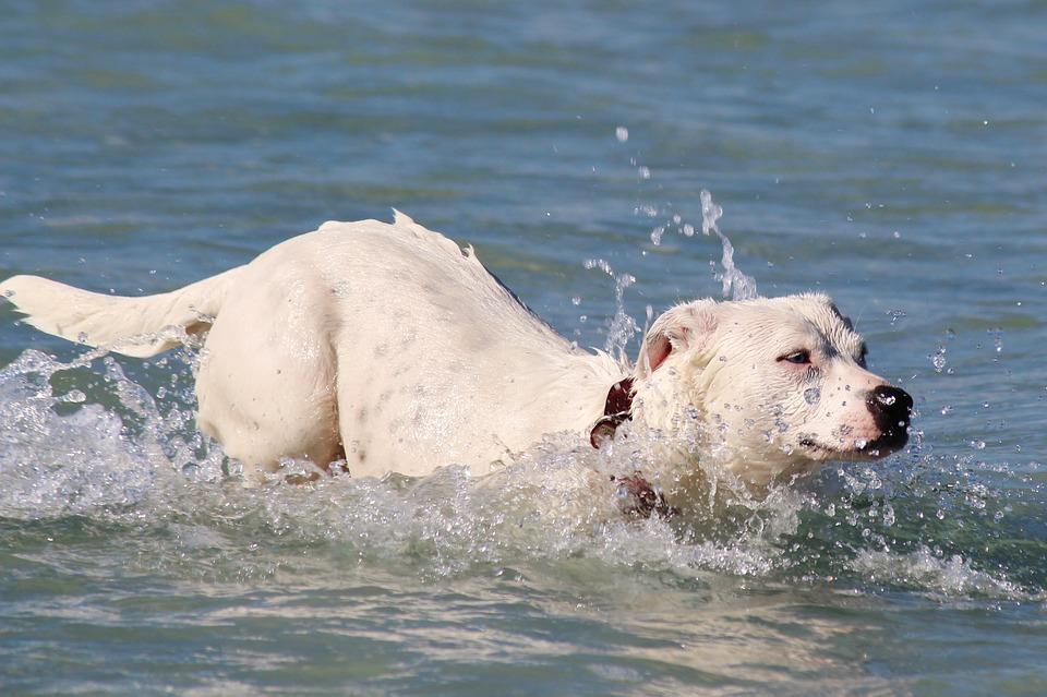 Nueva piscina de perros en Madrid