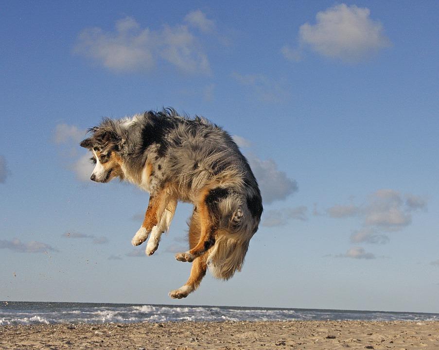 Nueva playa de perros en Pinedo