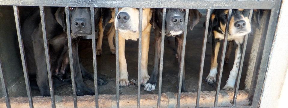 "La ""Humane Society International"" lucha en Yulin"