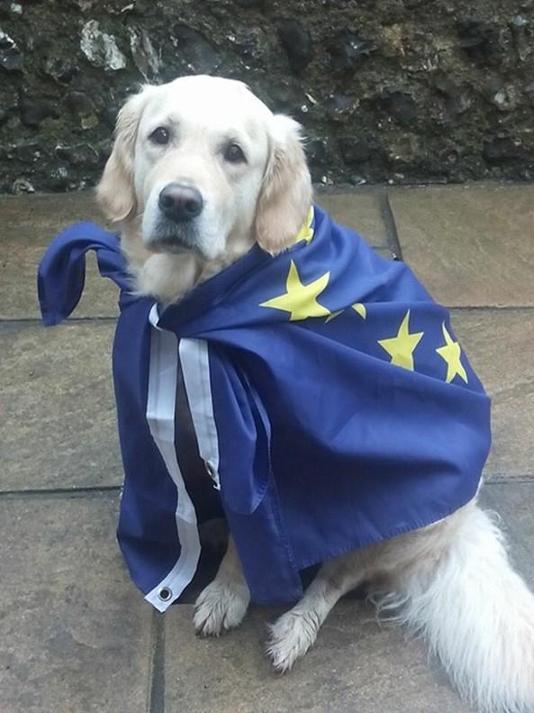 Los perros también participan en el Brexit