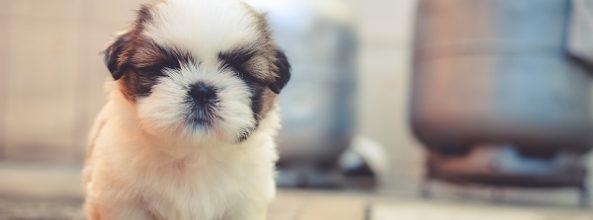 El imprinting y su importancia en la vida de un perro