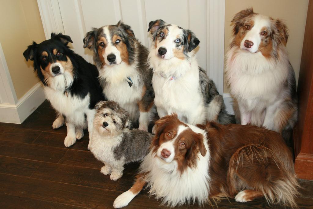 Perros recomendados para estar con niños