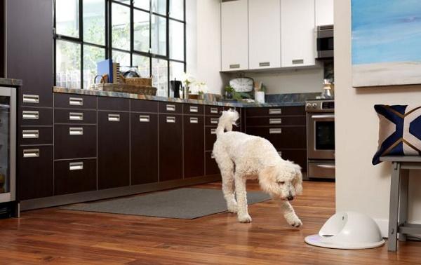 solución para perros solos