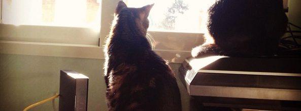 Leia y Cuki, las gatas de Lara