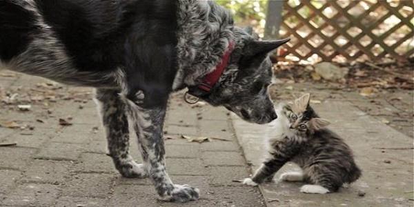 Max, el perro que cuida de un gato discapacitado