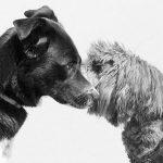 La regla de los tres segundos para presentar a perros