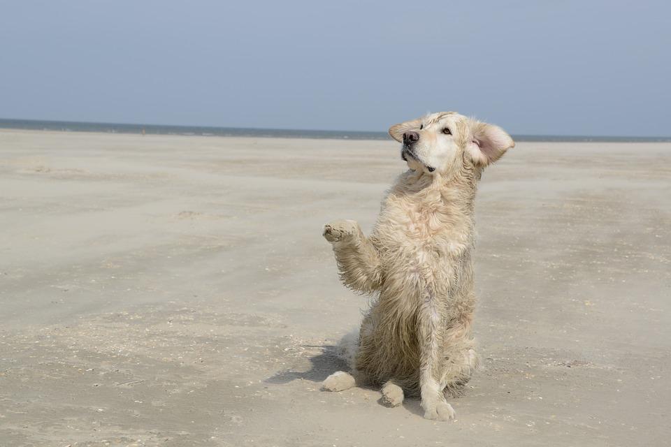 Nueva playa para perros en Barcelona