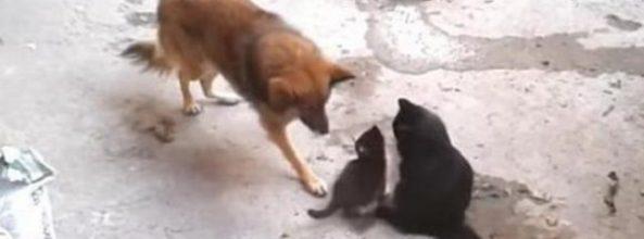 Gata presenta sus cachorros a su amiga