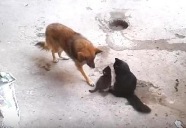 vídeo perros y gatos