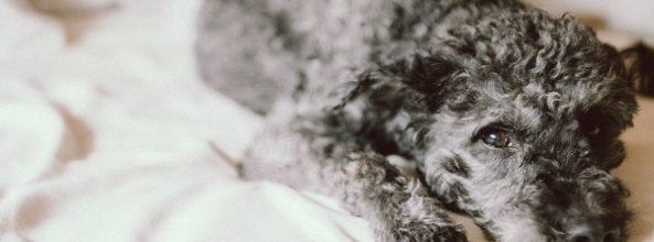 Países Bajos, primer país sin perros callejeros