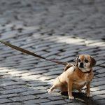 Solución para los perros que se orinan en casa