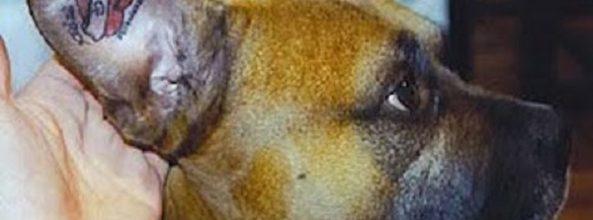 Tatuajes en perros y otros animales ¿maltrato animal?