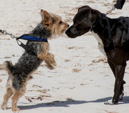 presentación perros