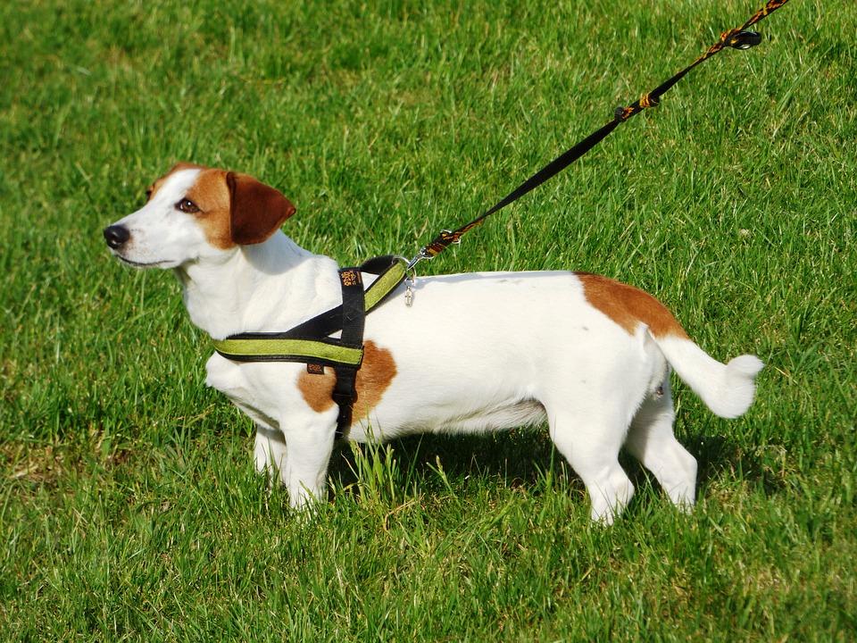 Los perros y la inapetencia en verano