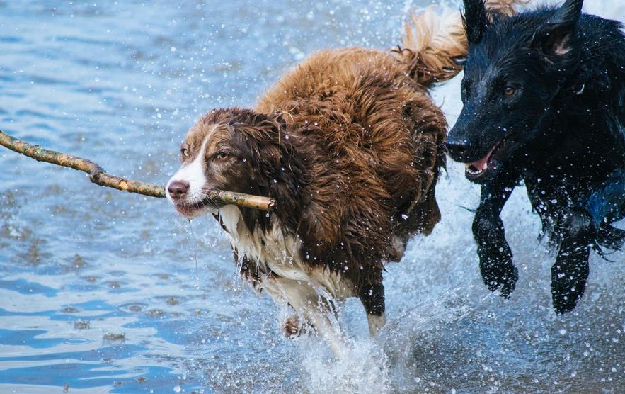 mapa playa perros