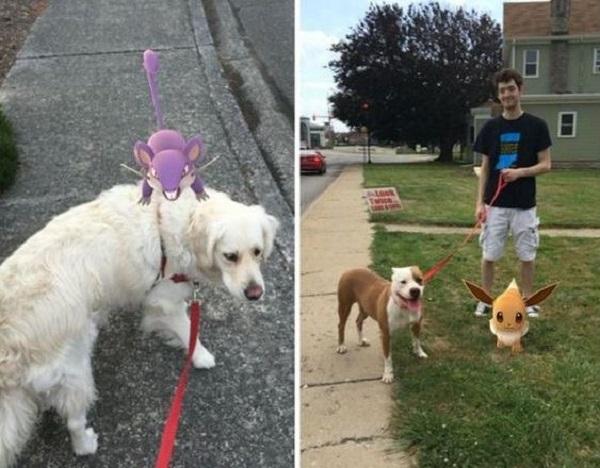 perros-pokemon