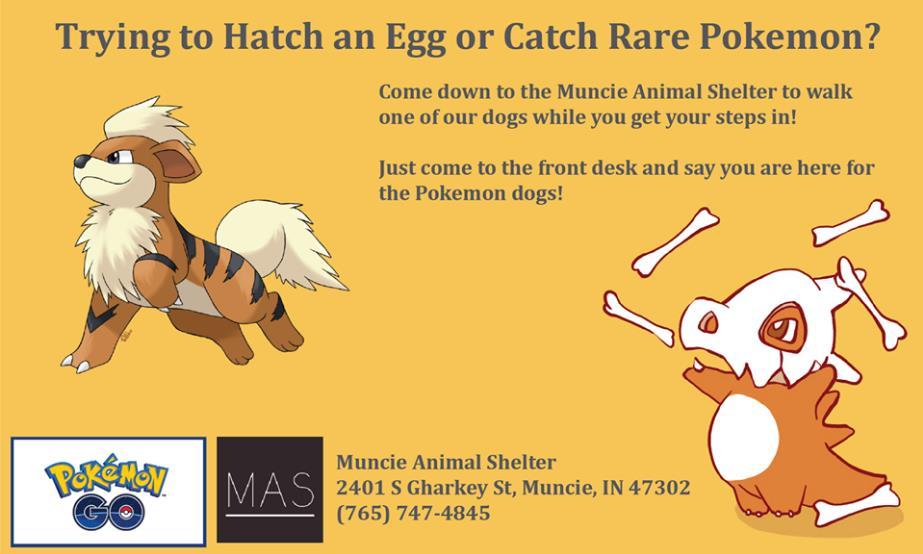 anuncio perros pokemon