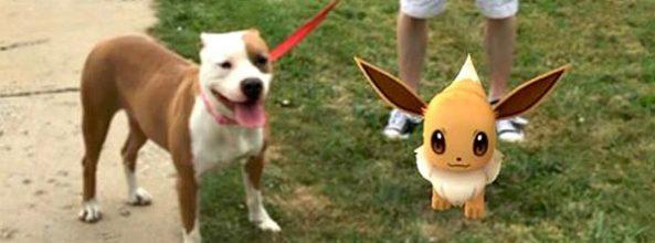 Perros de un refugio paseados gracias a Pokémon Go