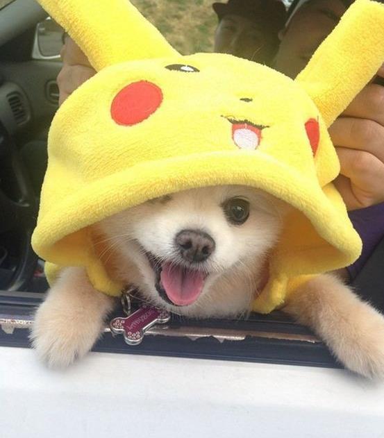 perros pokemon