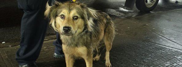 Los perros podrán ir gratis en el Metro este verano