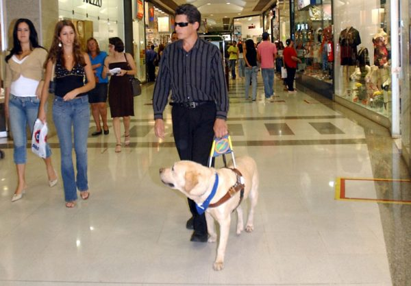 perros-pueden-viajar-metro-madrid2