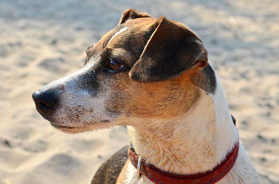 En la Playa de Bayas ¿aceptarán perros?