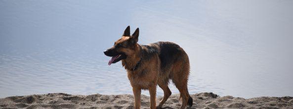 Redondela (Galicia) ya cuenta con dos playas para perros