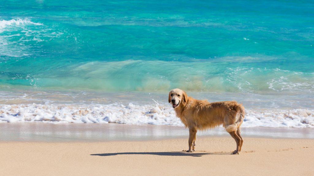 playa-perros-redondela-2