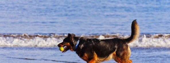 Dos nuevas playas para perros en Vigo