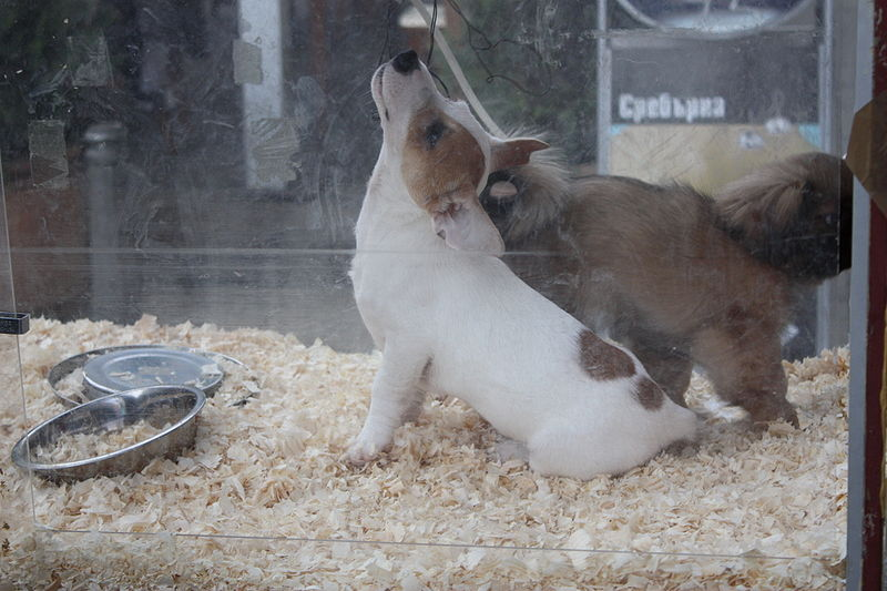 Las tiendas no podrán exhibir cachorros para vender