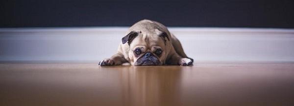 Síntomas caninos