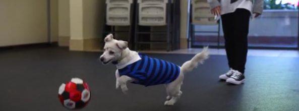 Julia y su perro Walter se comunican en lenguaje de sordos