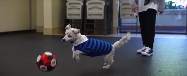 perro Walter sordo