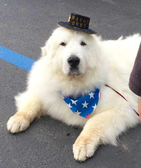 Perro elegido por tercera vez alcalde