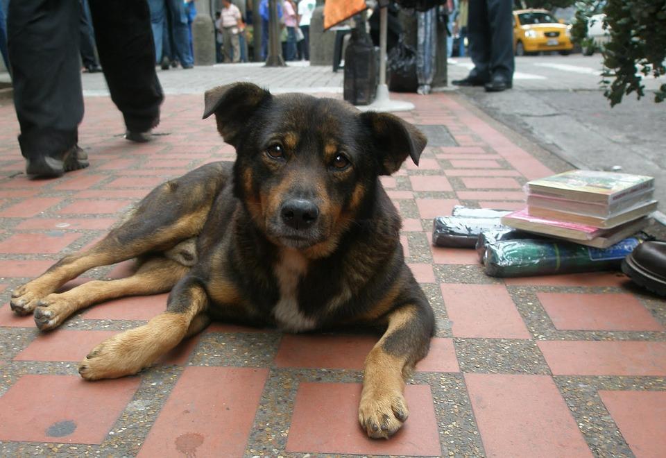 Terror en Pakistán: envenenan a más de 700 perros