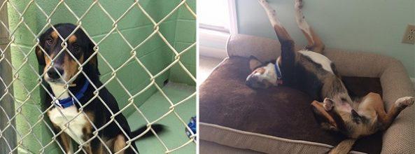 Fotos de perros antes y después de ser adoptados