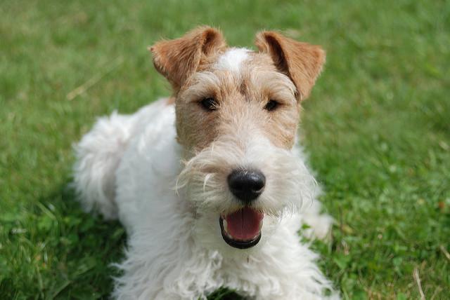 Pacma informa de casos de envenenamientos de cachorros