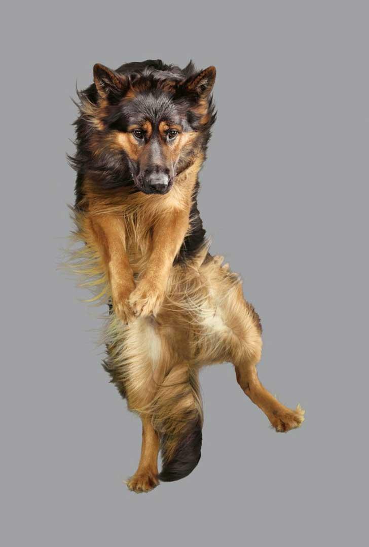 perro-cayendo-1